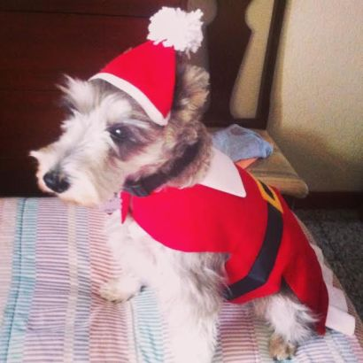 Botoneta the Schnauzer - Mrs Claus