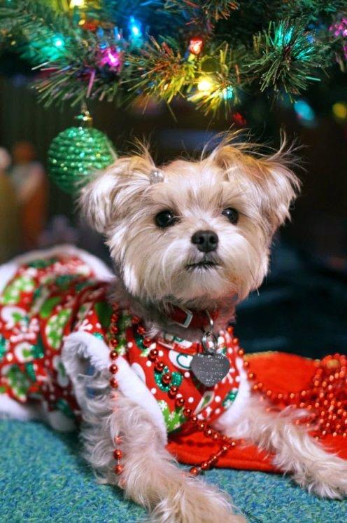 Minnie In Manhattan - Dog Fashion