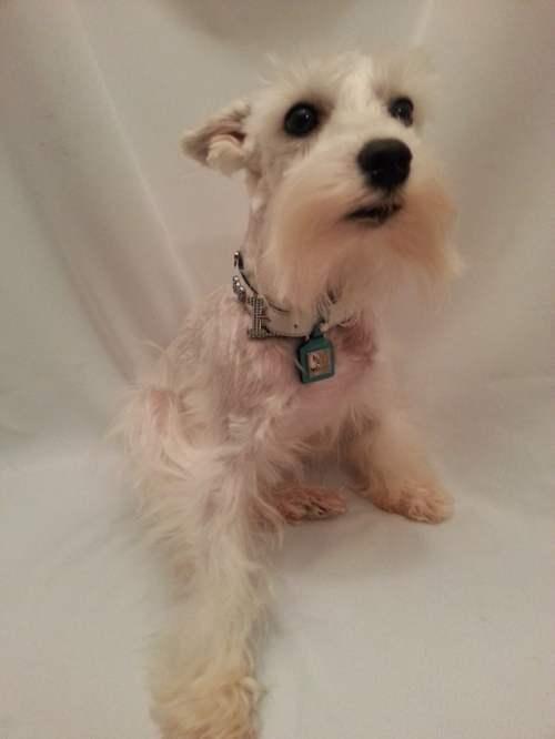 chrome bones dog collar