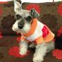 Terry The Mini Schnauzer - Orange White Red Dog Sweater ft