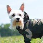 theo dog fashion ft