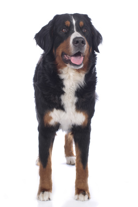 Comment dresser son chien - Retrouvez des conseils et