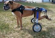 Comment prendre soin d'un chien handicapé