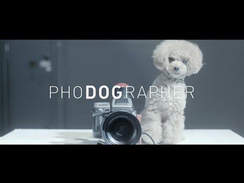 愛犬がカメラマンになって家族の写真を撮影!マースジャパンのWebムービー