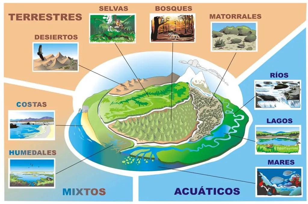 Los diferentes tipos de ecosistemas for Diferentes tipos de viveros