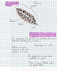 Irene Fernández Ribo - Materiales básicos de un cetrero