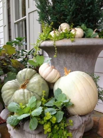 Pumpkins in planters