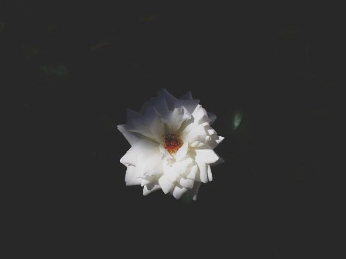 flower picture unsplash