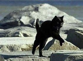 Roadrunner Michael Greenblatt running cat