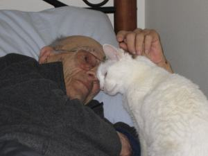 therapy cat visiting patient