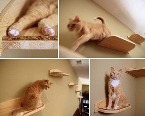 cat-shelves-climbers