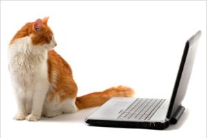 cat_blog