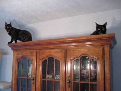 cats_on_top_of_cabinet