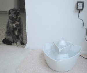 Ruby with Drinkwell Pet Fountain
