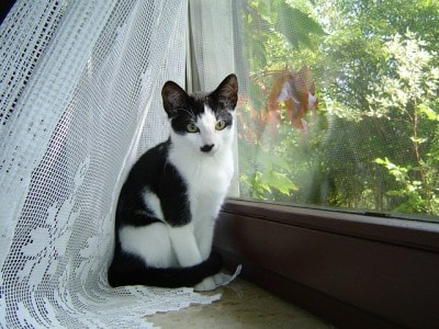 cat_at_window