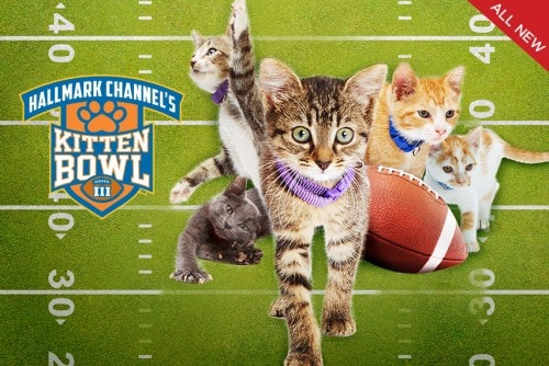 Kitten-bowl-2016