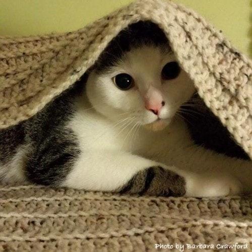 cat-under-blanket