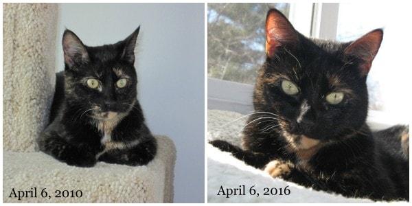 cat-adoption-anniversary