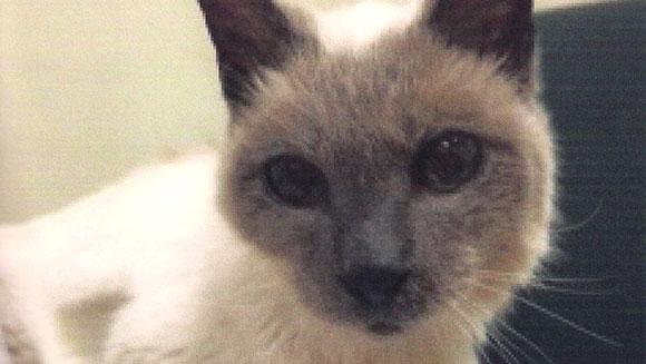 oldest-living-cat