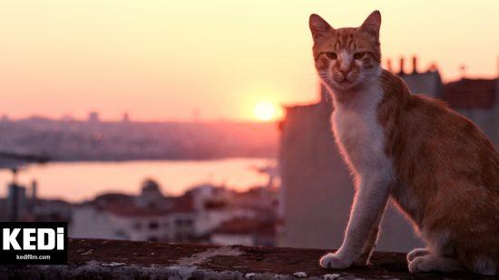 Kedi-Istanbul-cats
