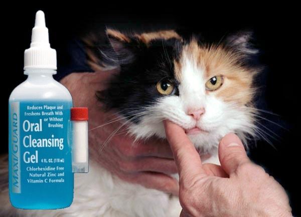 MAXIGuard-oral-cleansing-gel