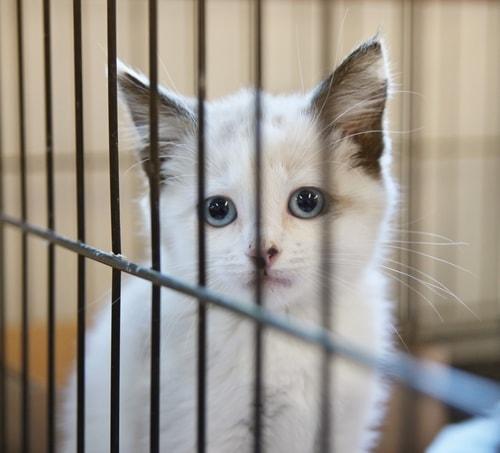 adopt-a-cat-month