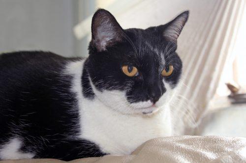 aging-cat