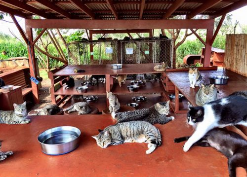 lanai-cat-sanctuary