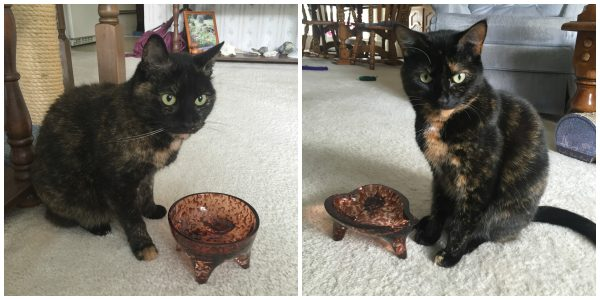 tortoiseshell-cat-bowls