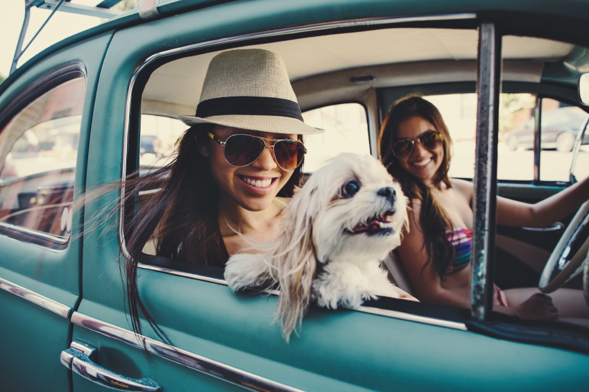 Best Road Trips for Dogs