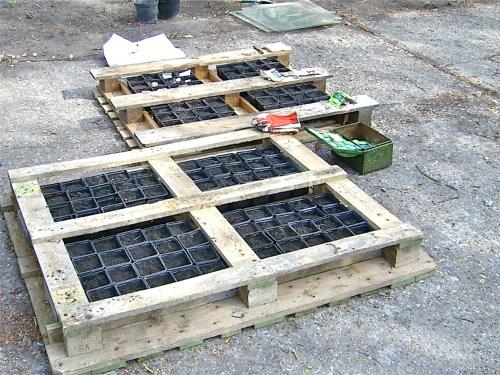 Medium Of Pallet Container Garden