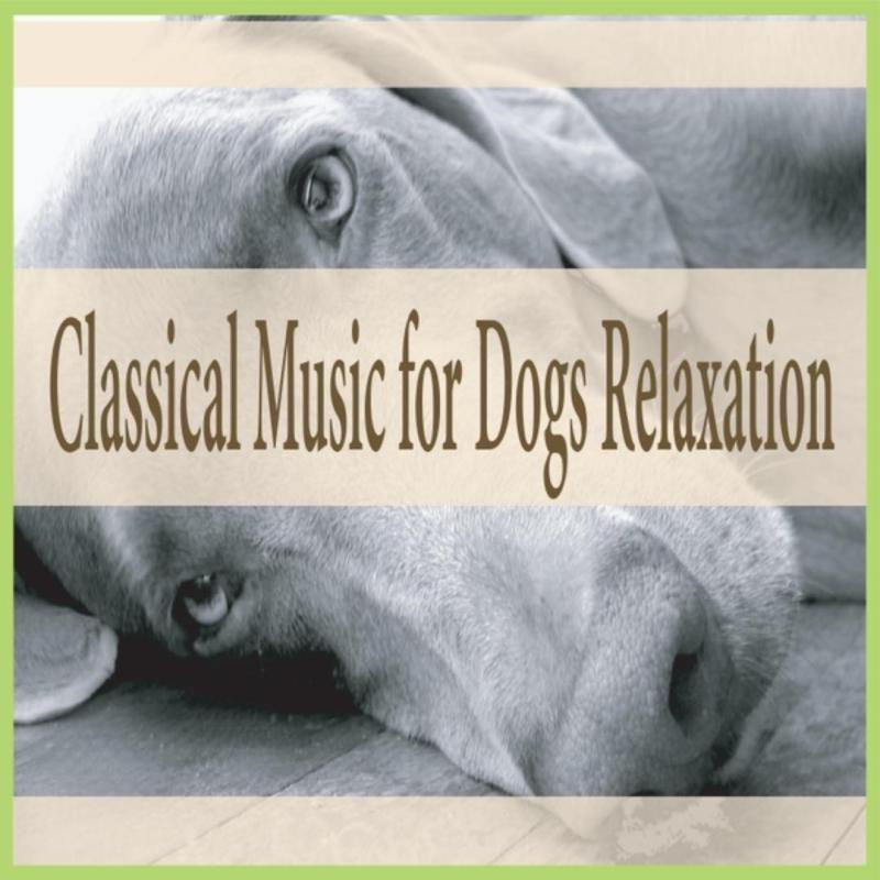 Large Of Calming Music For Dogs