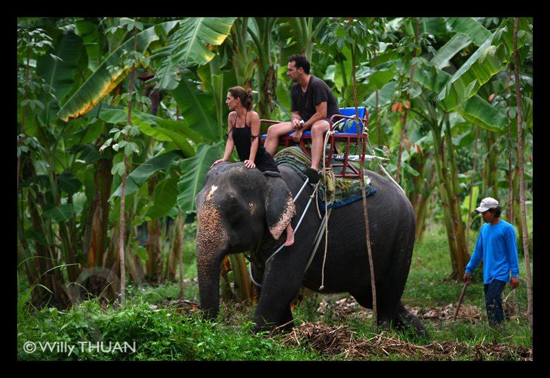phuket-elephant-trekking