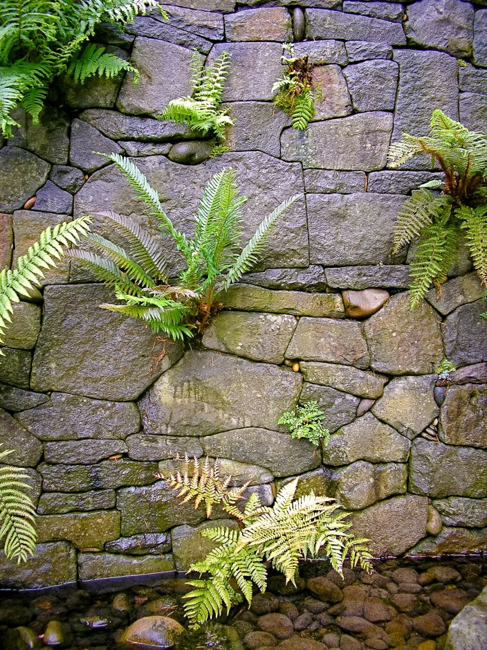 Eric Contey Stonework: Rhododendron Gardens fern wall and pool detail