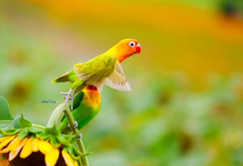 Fly ~ ~ ~ Parrot