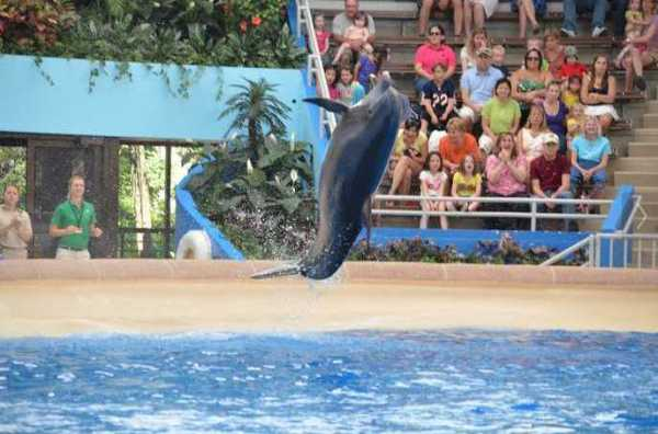 Brookfield Zoo Dolphin Show 078