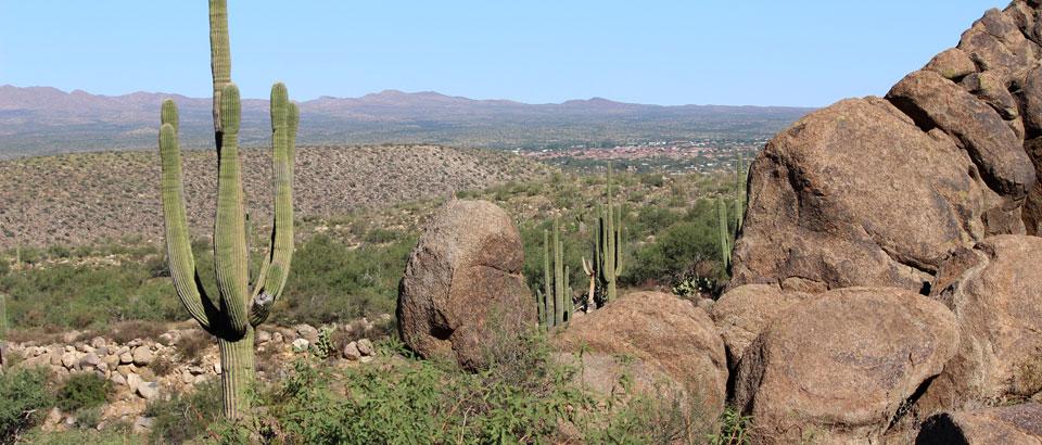 Tucson Desert Landscape