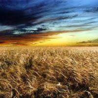 Situación del mercado mundial de cereales y oleaginosas