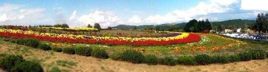 Autumnal flower field