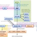 Energiomsättning. Försök till översikt över olika omsättningar. T4.