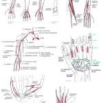 Diverse hand- och armrelaterade bilder. T2/T9.