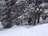 Powder Trees at Wayback at Keystone