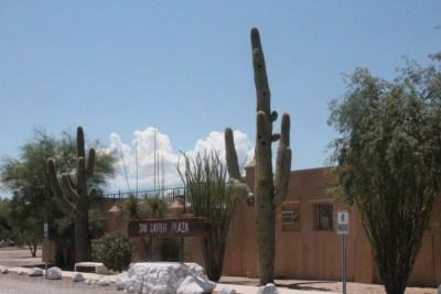 Saguaro en décor dans le village de San Xavier-del-Bac