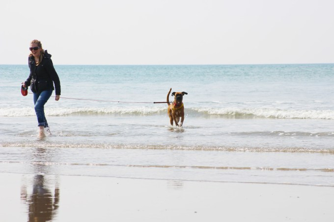 Boxer dog on Borth beach