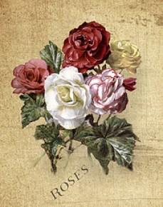 Roses I made