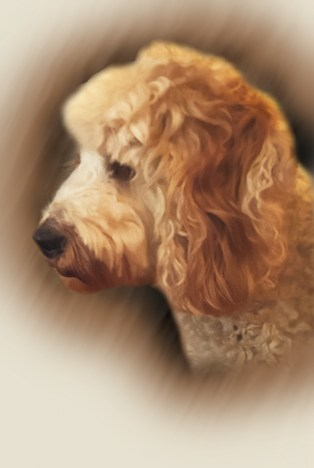 Portrait of My Dog