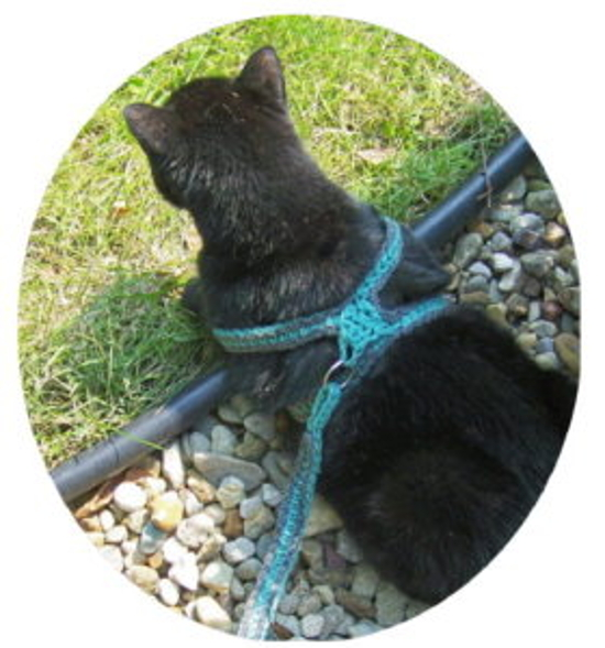Free Crochet Pattern For Dog Harness : Crochet A Cat Harness Leash ? craftbits.com