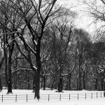 Snow on Trees, Central Park NYC