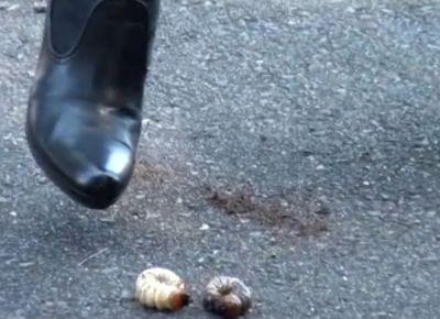 かぶと虫の幼虫が「っパーン!」という溜めからの踏み潰しで破裂!