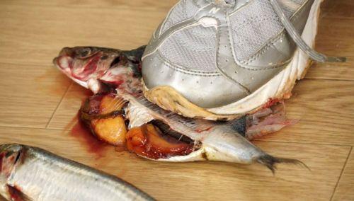 魚をつま先で踏み付けたら「ぶりゅっ!」と卵巣と内臓が出てきた!